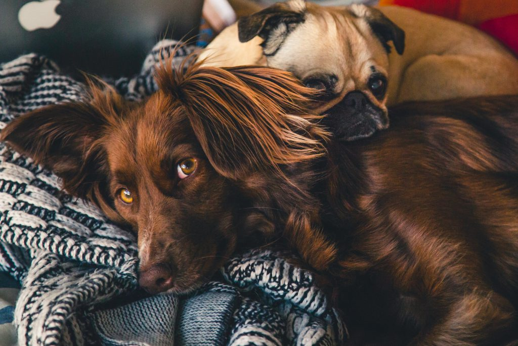 How Pets Help Recovery